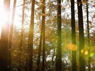 阳光下的参天树木