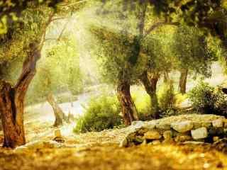唯美阳光下的树林风景壁纸