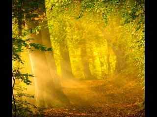 唯美阳光下的森林风景壁纸