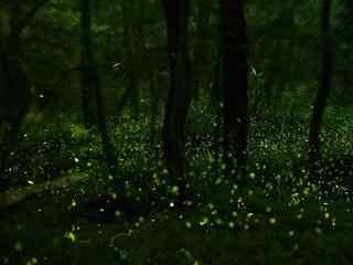 夏日萤火虫林间风景壁纸
