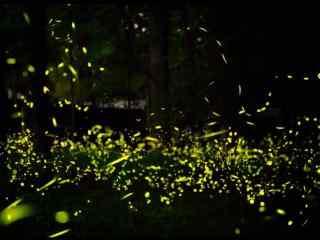 夏日流萤之萤火虫唯美壁纸