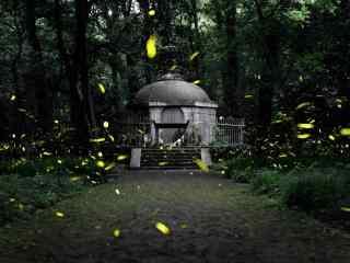 唯美的萤火虫飞舞风景壁纸