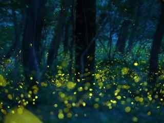 美丽的夏日萤火虫风景壁纸