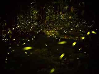 唯美夏日萤火虫森林风景壁纸