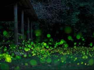 萤火虫之夏日流萤风景壁纸