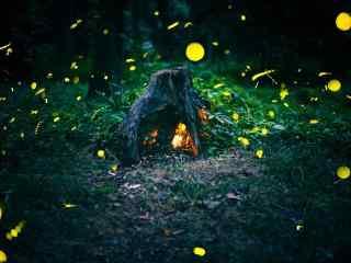 夏日流萤之萤火虫好看的桌面壁纸