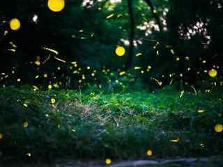 夏日流萤之萤火虫风景壁纸