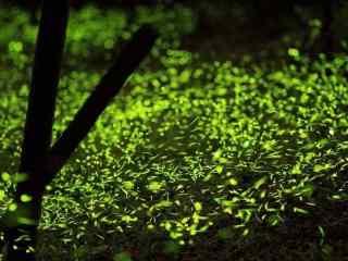 小清新萤火虫夜间飞舞风景桌面壁纸