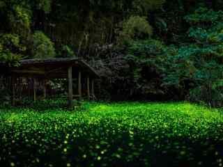 夏日萤火虫夜间飞舞壁纸