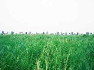 小清新台湾垦丁风景壁纸