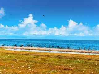好看的青海湖风景