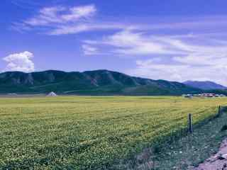 清新青海湖风景高清壁纸
