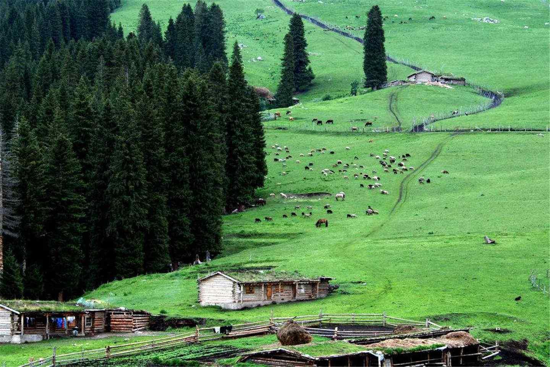 绿色清新唯美的山坡风景