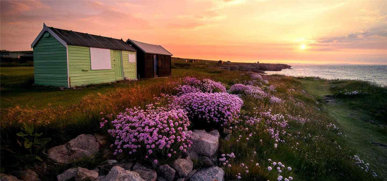 夕阳下开满鲜花的山坡风景壁纸