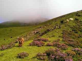 放(fang)著羊的山坡風(feng)景壁紙