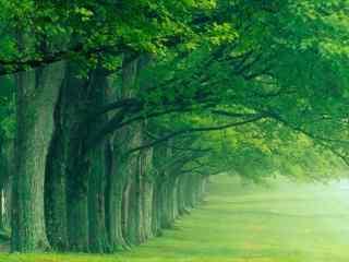 夏日清涼(liang)風景之森林壁紙