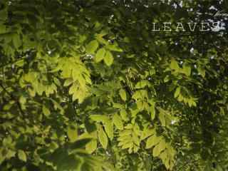 小清新綠色(se)森林風景壁紙
