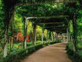夏日風景小清新森林壁紙