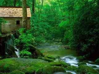 小清新綠色(se)森林夏日風景