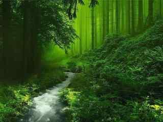 綠色(se)森林夏日小清新風景壁紙