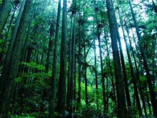 綠色(se)森林小清新風景壁紙