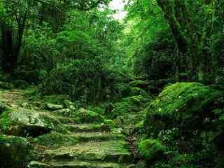 綠色(se)森林夏日清涼(liang)風景壁紙