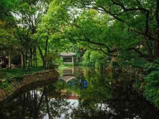 夏日小清新森林風景壁紙