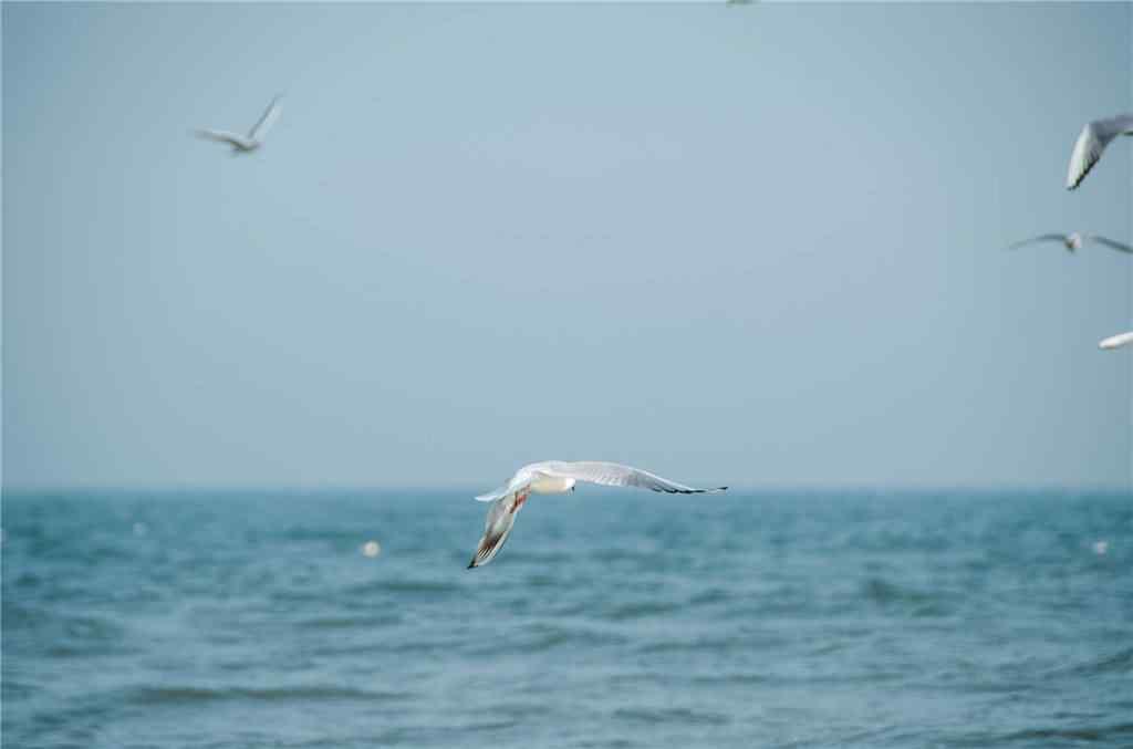 北戴河的大海风景壁纸