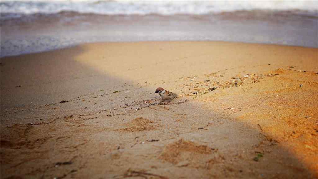 北戴河海边沙滩小清新风景壁纸