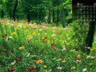 2017年8月日历美丽的草原风景壁纸