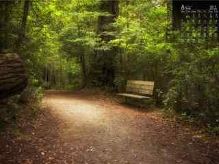 2017年8月日历安静的森林风景壁纸