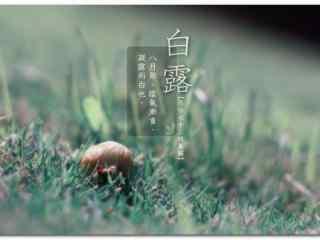 2017白露节气小清新草地壁纸