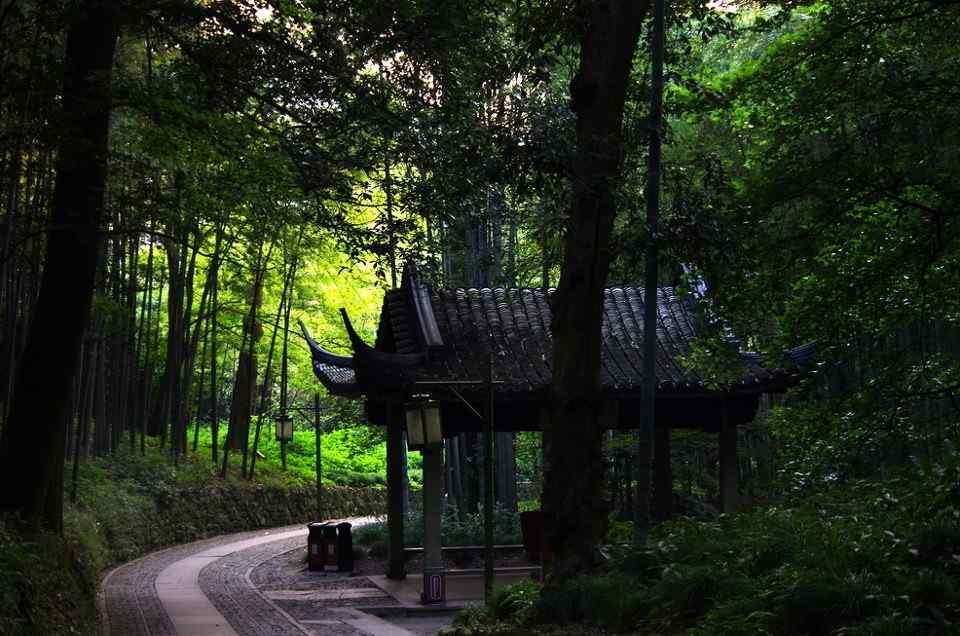 小清新竹林风景壁纸