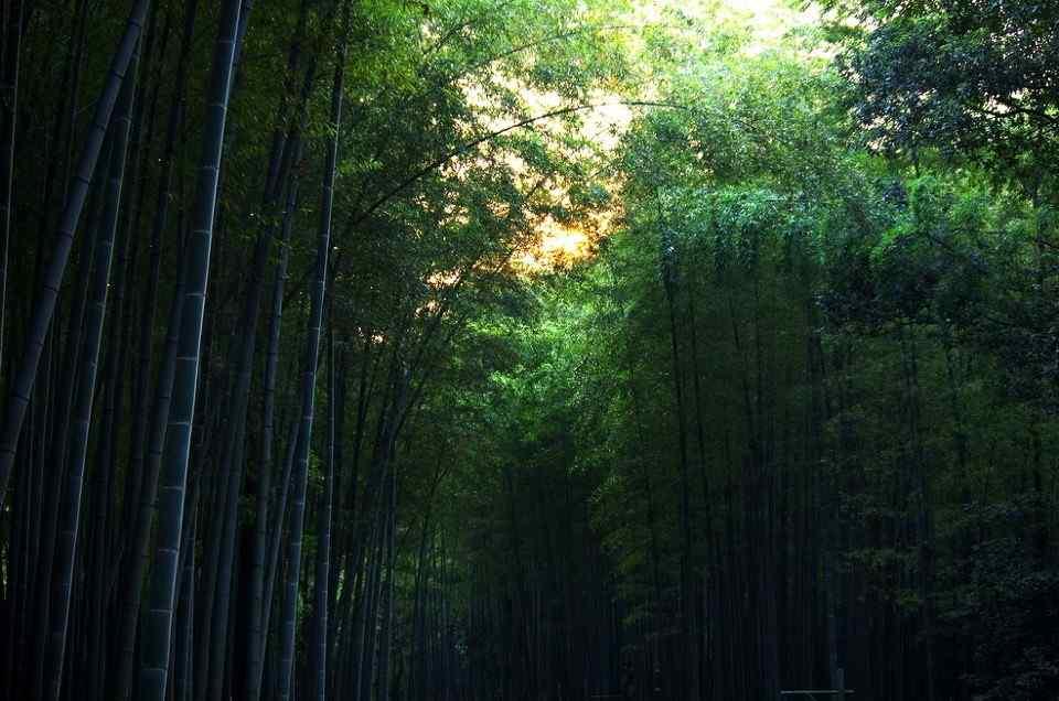 美丽的竹林风景图片壁纸
