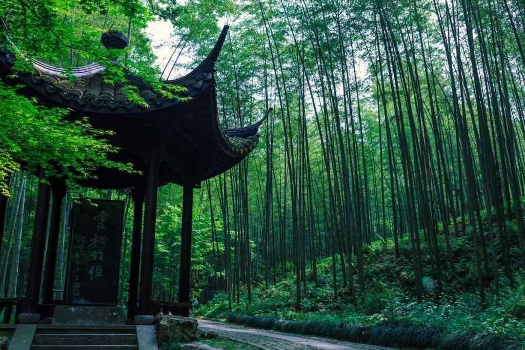 曲径通幽处竹林风景壁纸