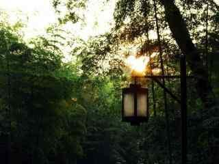 幽静的竹林唯美风景壁纸