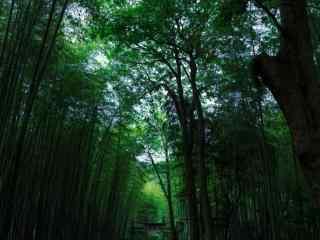 小清新竹林风景高清壁纸
