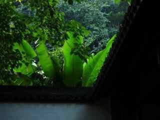 美丽的竹林风景桌