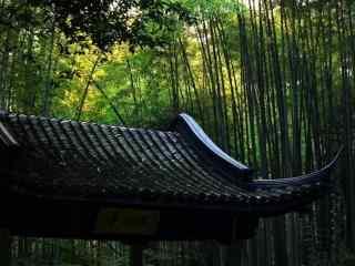 美丽的竹林唯美风景壁纸