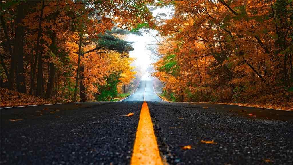 秋日的森林与公路风景壁纸