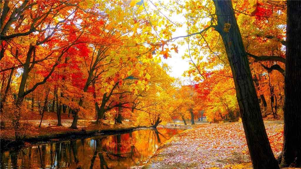 火红的秋日风景壁纸