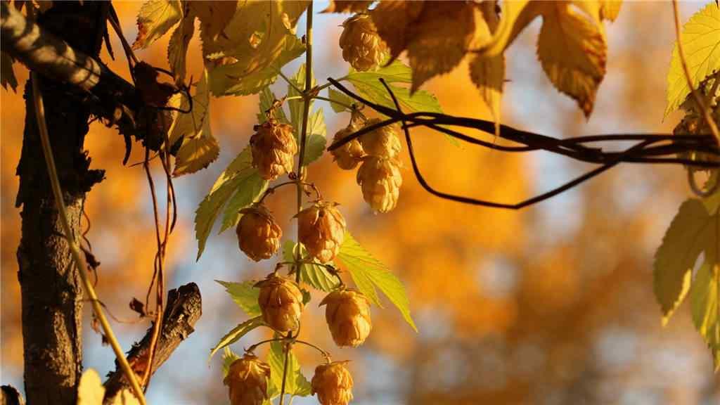 唯美的秋日黄色树叶桌面壁纸
