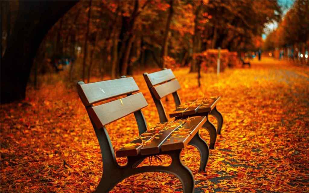 深秋公园中的风景壁纸