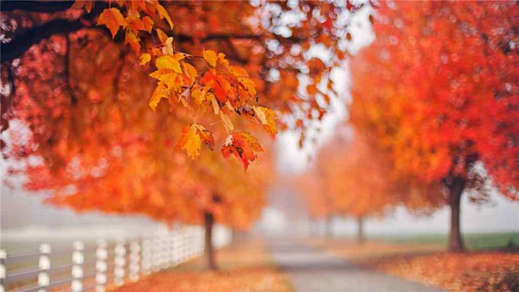 唯美的秋日的森林风景壁纸