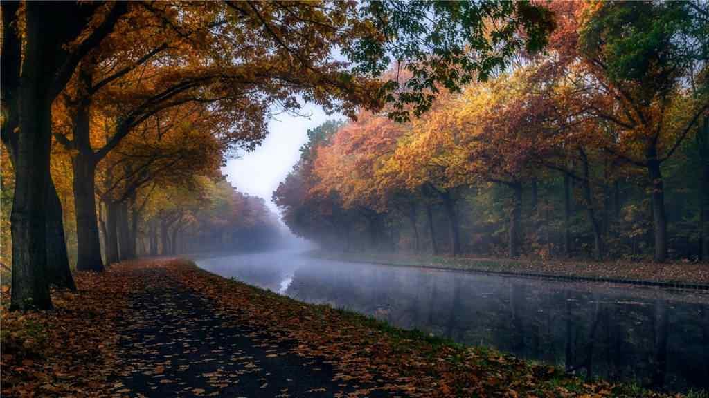 美丽的秋日的森林风景壁纸