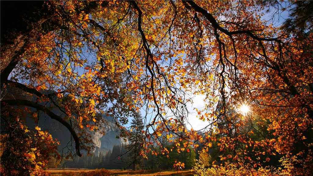 美丽的秋日风景壁纸