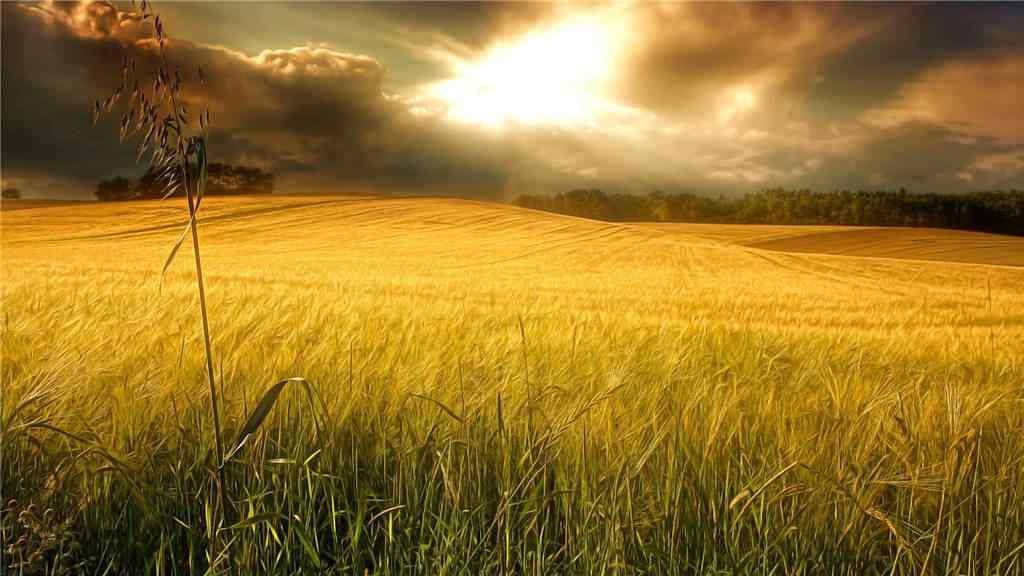 美丽的秋日草原图片壁纸