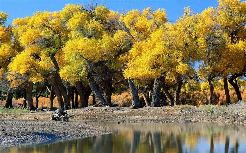 秋日森林风景桌面壁纸
