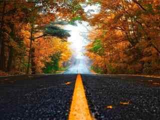 秋日的森林與公路風景壁(bi)紙