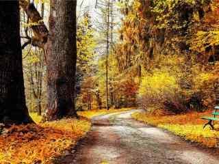 秋意浓之秋日风景壁纸